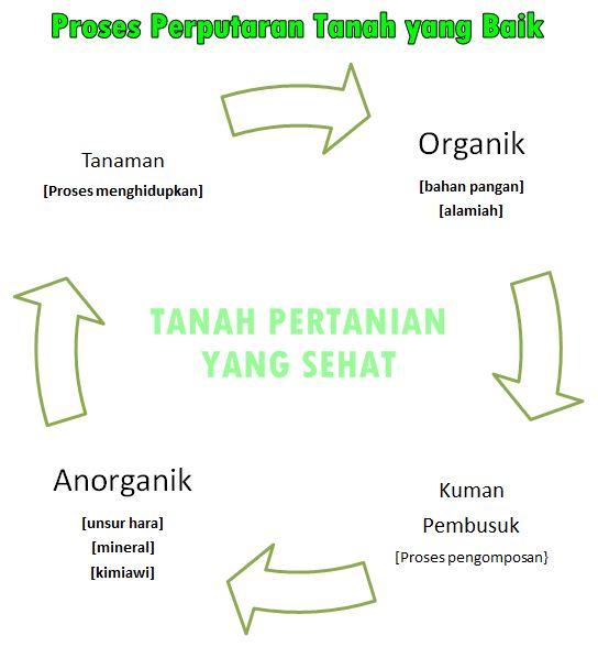 Proses mengolah tanah yang baik