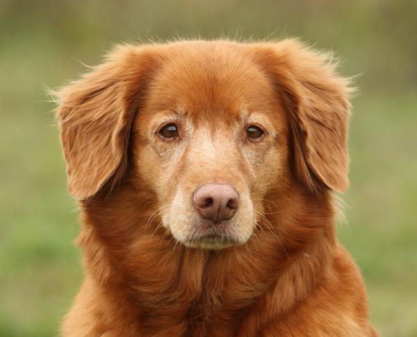 Cara Mengatasi Penyakit Anjing Gila - Mencegah Rabies Pada Hewan dan Manusia