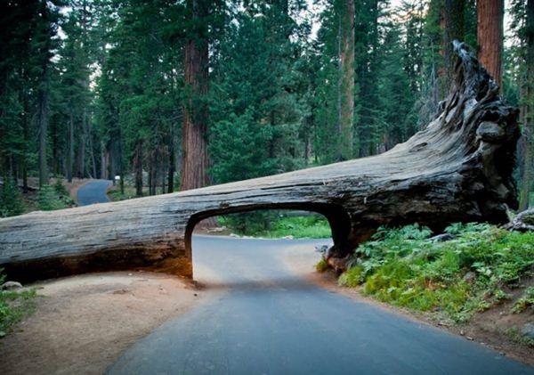 Cara Memperkuat Batang & Akar Pohon - Alasan Mengapa Pohon Cepat Tumbang Diterpa Angin Kencang