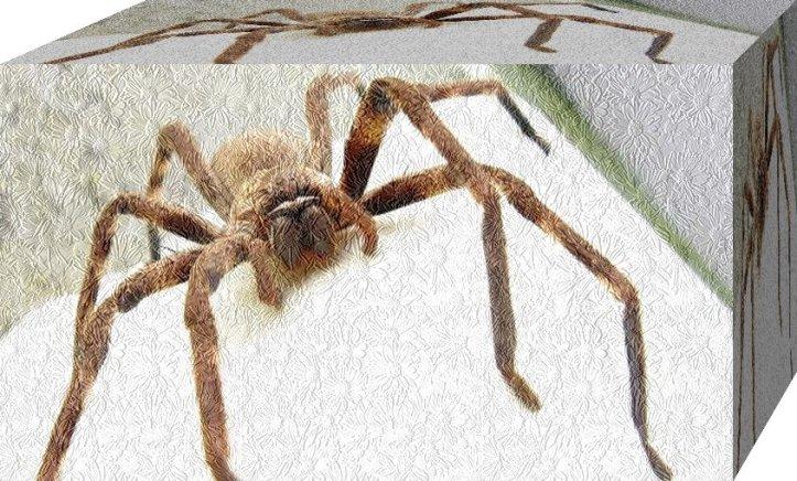 Manfaat laba-laba yang hidup di lingkungan sekitar rumah anda