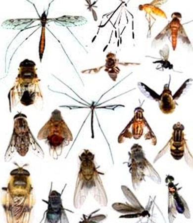 Tips & trik mengusir membasmi serangga pengganggu dari lingkungan rumah anda