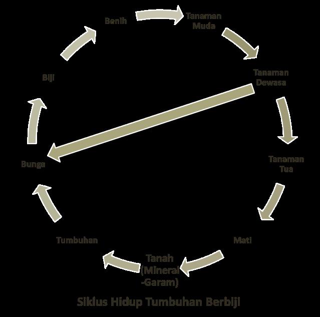 Siklus Hidup Tumbuhan Berbiji (Tanaman Tingkat Tinggi)