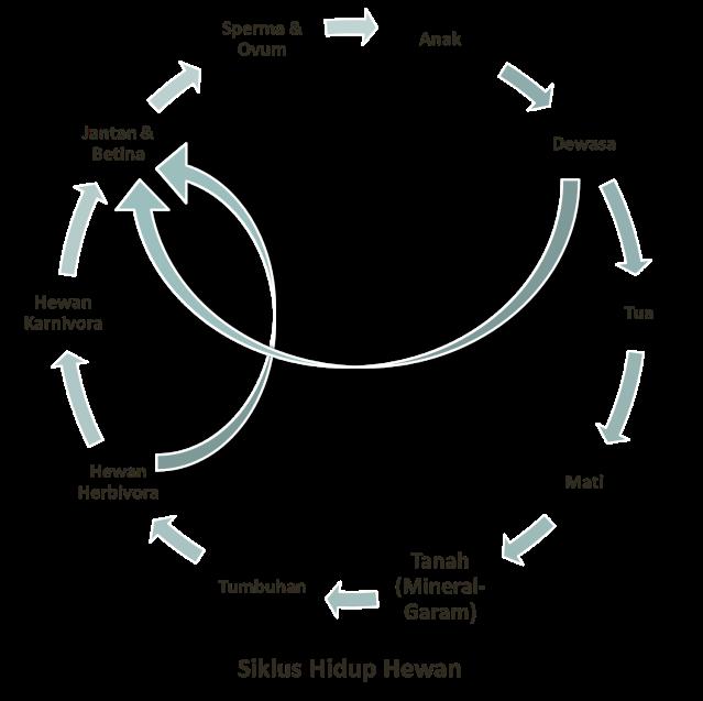 Siklus Kehidupan Hewan - Siklus Hidup Binatang Karnivora Dan Herbivora
