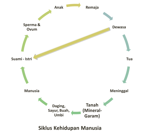 Siklus Kehidupan Manusia (Siklus Hidup Kita)