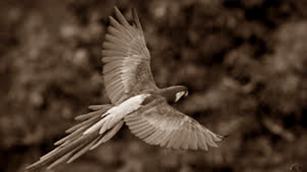Burung Bisa Terbang desktop.fansshare.com