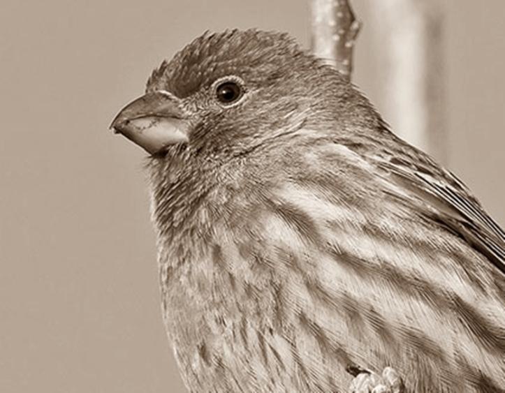 Alasan Burung Bisa Terbang Tapi Ayam Tidak Terbang? Faktor Penyebab Burung Bisa Melayang Di Udara