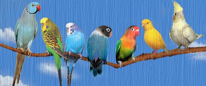 Burung Dipersiapkan Untuk Terbang by Oiseaux. 3