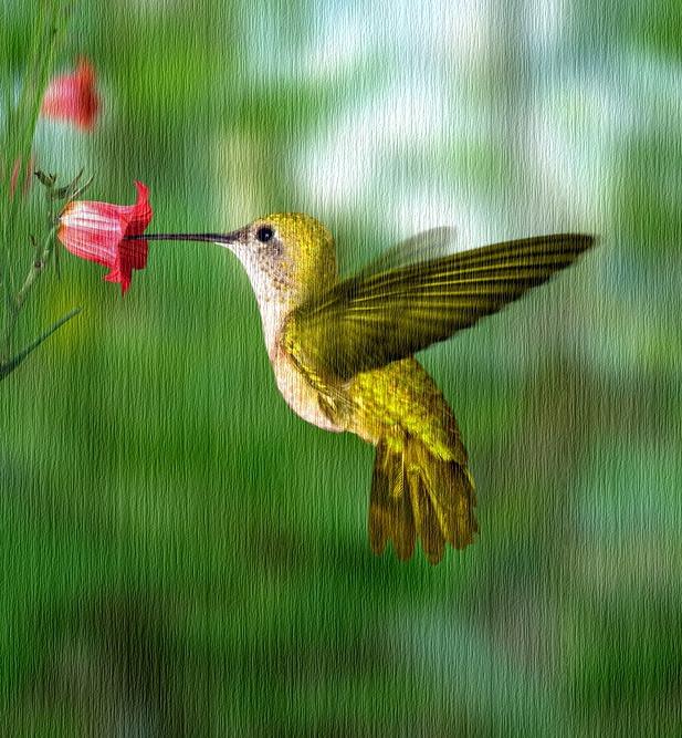 Burung Hidup Untuk Terbang by Enseigne Moi