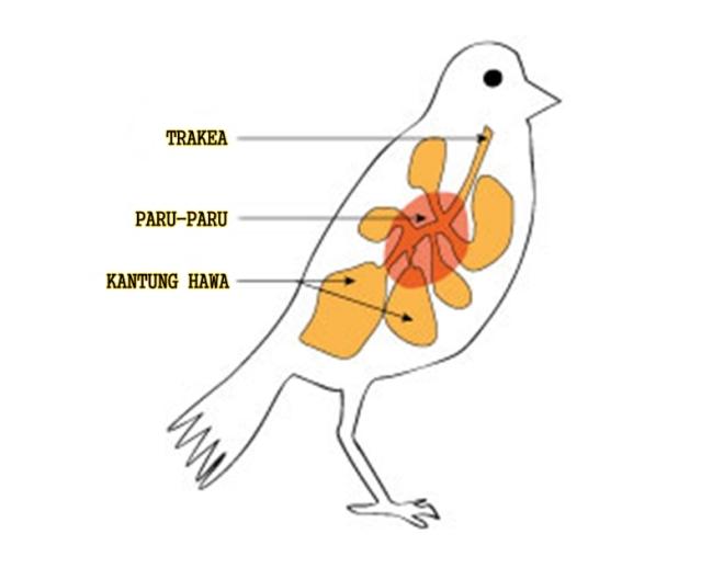 Pundi-Pundi Udara Agar Burung Bisa Terbang